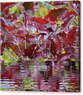 Tn Fall Water Canvas Print