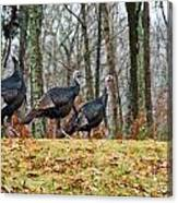 Tom Turkeys All In A Row 1 Canvas Print