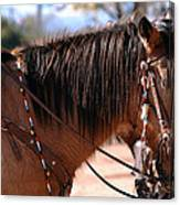 Tombstone Horse Canvas Print
