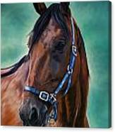 Tommy - Horse Painting Canvas Print