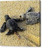 Tommy And Timmy Turtle Canvas Print