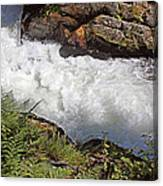 Tongass National Forest Canvas Print