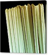 Toothbrush Bristles, Sem Canvas Print