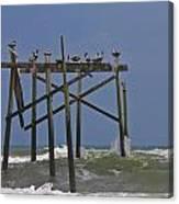 Topsail Ocean City Pelicans Canvas Print