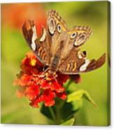 Torn Wings Full Of Life Canvas Print