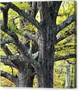 Tortured Trees Canvas Print