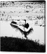 Touchdown-black And White Canvas Print