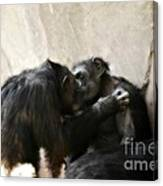 Touching Moment Gorillas Kissing Canvas Print