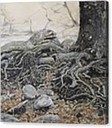 Tough Tree Canvas Print