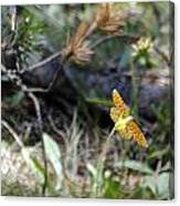 Toulumne Butterfly Canvas Print