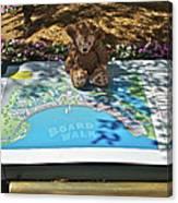 Tourist Bear Canvas Print
