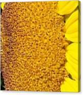 Sunflower -tournesol - Flower Canvas Print