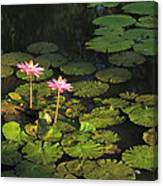 Tower Grove Park Water Lilies Canvas Print