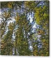 Towering Kodiak Canvas Print