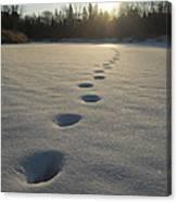 Tracks Into The Sunrise Canvas Print