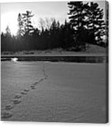 Tracks To The Water Canvas Print