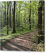 Trail Through Spring Forest Bavaria Canvas Print