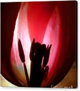 Translucent Tulip Canvas Print