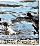 Travelin Coots Canvas Print