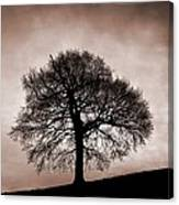 Tree Against A Stormy Sky Canvas Print