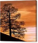 Tree Against A Sunset Sky Canvas Print