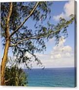Tree And A Tropical Beach Canvas Print