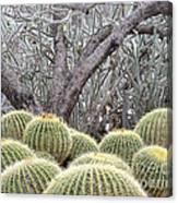 Tree And Barrel Cactus Canvas Print