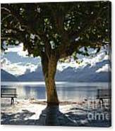 Tree And Benches Canvas Print