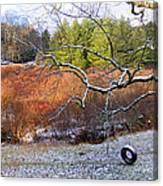 Tree And Tire Swing In Winter Canvas Print