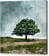 Tree And Wildflowers  Canvas Print