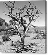 Tree At Cedar Ridge Bw Canvas Print