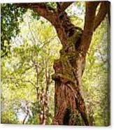 Tree At Killarny Forest Canvas Print