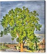 Tree At Newport On The Levee Canvas Print