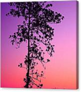 Tree At Twilight Canvas Print