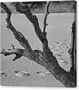 Tree Branch And Footprints On Sleeping Bear Dunes Canvas Print
