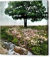 Tree By Stream Canvas Print