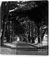 Tree Canopy Promenade Road Drive . 7d9977 . Black And White Canvas Print