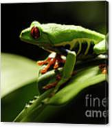 Tree Frog 13 Canvas Print