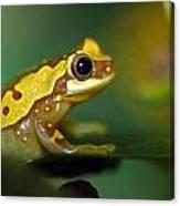 Tree Frog Dream Canvas Print