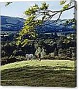 Tree In A Field, Great Sugar Loaf Canvas Print