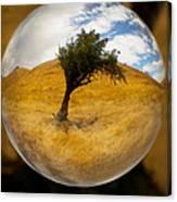 Tree In A Field Through A Glass Eye Canvas Print