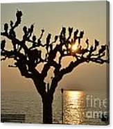 Tree In A Foggy Sunset Canvas Print