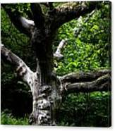 Tree In Denmark Canvas Print