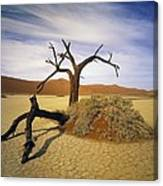 Tree In Desert Canvas Print