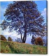 Tree In  English Park Canvas Print