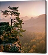 Tree In Morning Llght In Saxon Switzerland Canvas Print