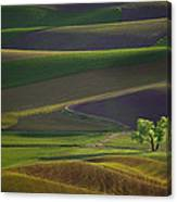 Tree In The Palouse Canvas Print