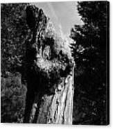Tree Key Hole 1 Canvas Print