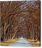 Tree Lined Lane Canvas Print