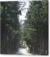 Tree Lined Street Canvas Print